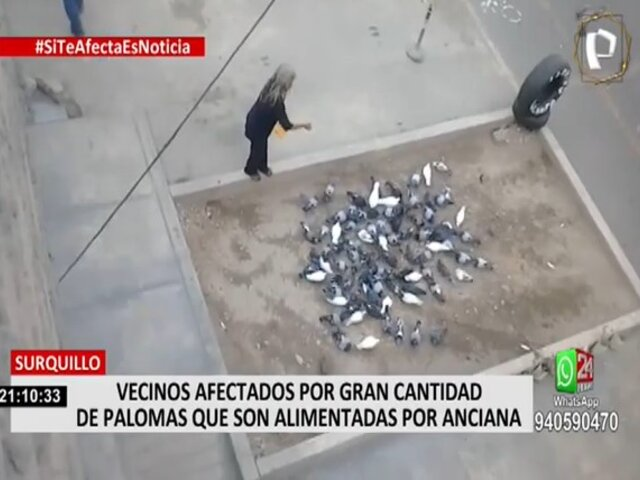 Surquillo: Denuncian inacción de las autoridades ante plaga causada por vecina que alimenta palomas