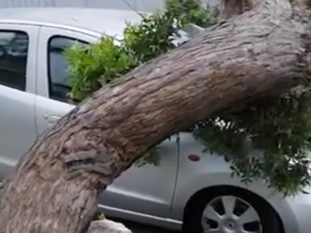 Cae enorme árbol sobre dos vehículos estacionados en Pueblo Libre