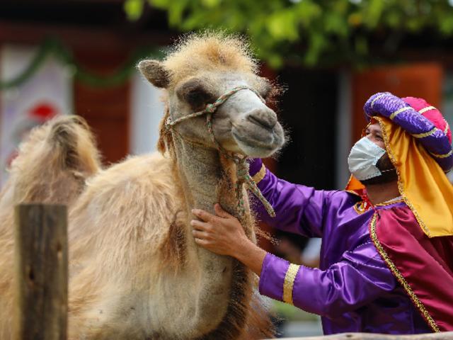 Parque de las Leyendas presenta nacimiento viviente con los animales del zoológico