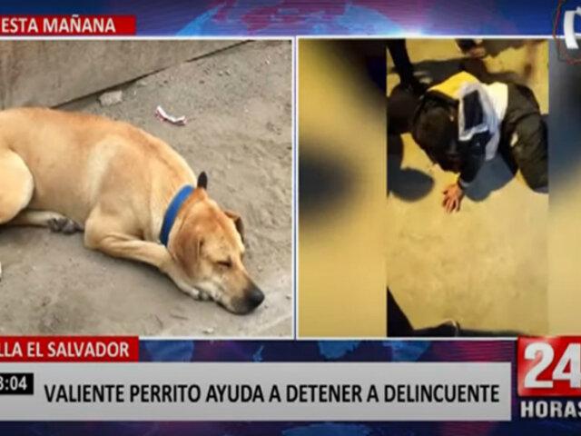 VES: valiente perrito de 10 años de edad ayudó a detener a un delincuente