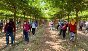Gobierno enviará delegación de ministros a Ica para diálogo con trabajadores agrarios