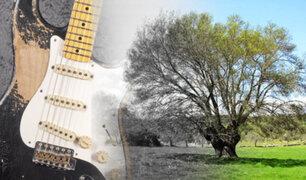 Cambio climático: la madera para guitarras se extingue