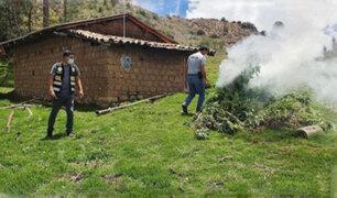 Ayacucho: Policía incinera plantones de marihuana hallados en medio de maizales