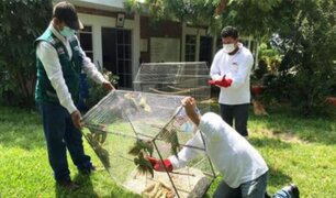 Piura: Serfor y PNP rescataron a aves encerradas en pequeña jaula
