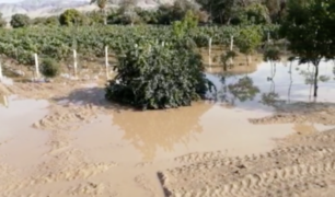 Agricultores perjudicados tras desborde del río Ica
