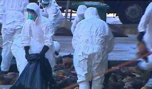 Brote de gripe aviar obliga a sacrificar cerca de 19 millones de aves en Corea del Sur