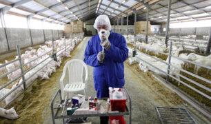Países Bajos: temor por nueva enfermedad que sería transmitida por cabras