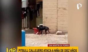 SMP: perro pitbull abandonado ataca a niña de 10 años