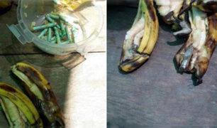 La Libertad: mujer pretendía ingresar a penal marihuana al interior de plátanos