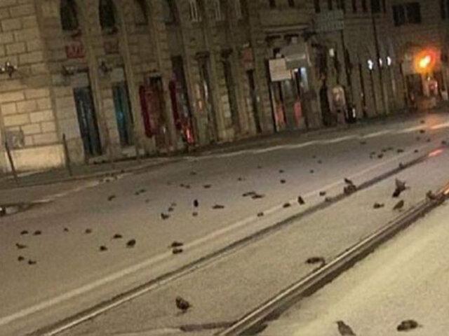 Italia: cientos de aves muertas aparecen en varias avenidas tras festejos por Año Nuevo