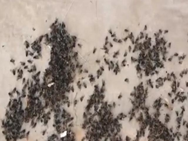 Vecinos denuncian que plaga de moscas invade casas de playa en el Sur