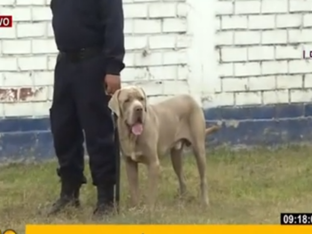 MML presenta a los nuevos integrantes de su brigada canina