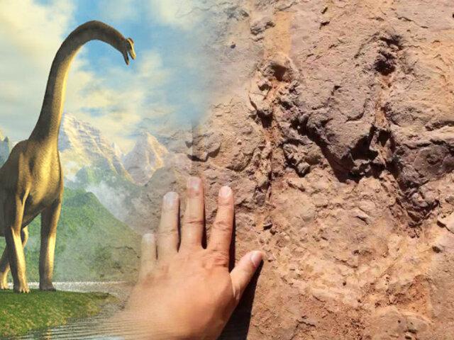 Encuentran más de 240 huellas de dinosaurios en China