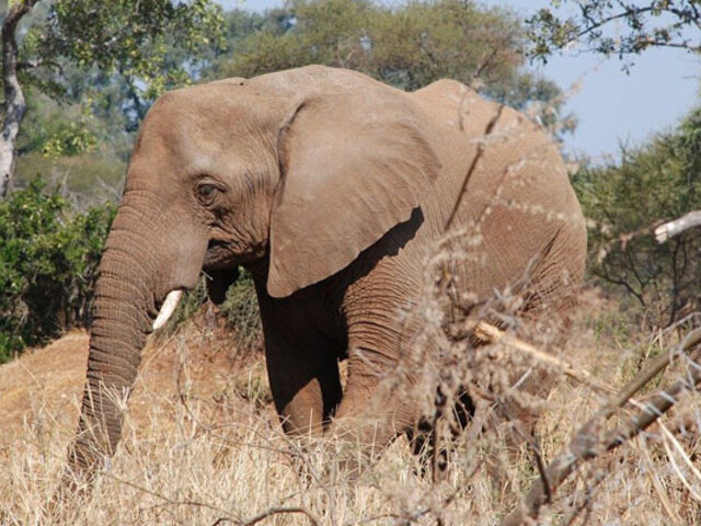Elefante salvaje mató a turista que había acampado en un parque natural de Tailandia