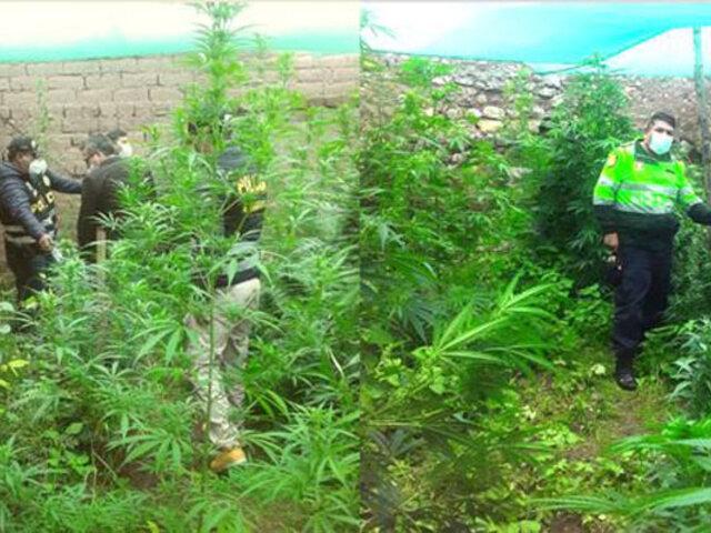 Cusco: capturan sujeto que tenía al interior de su vivienda un jardín de marihuana