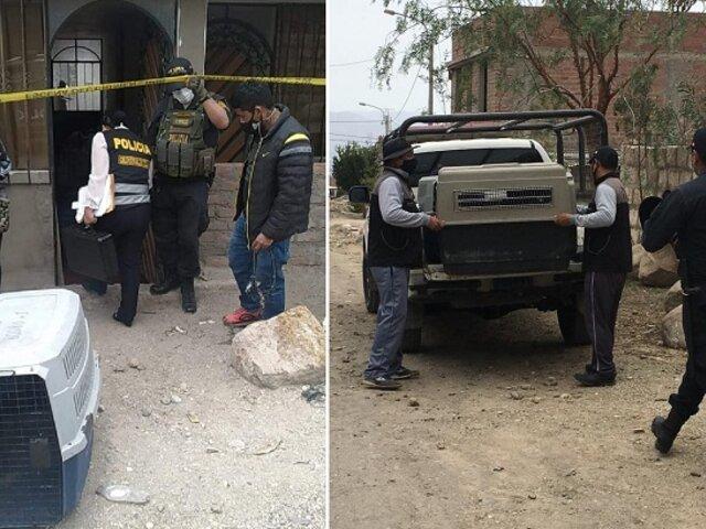 Horror en Arequipa: dos perros pitbull atacan a niño de 6 años hasta matarlo