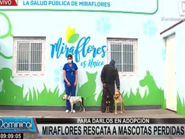 Miraflores: comuna rescata a mascotas perdidas para ponerlas en adopción