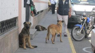 Rabia canina alerta a Colegio Médico Veterinario Departamental de Lima