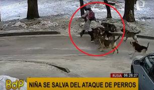 Rusia: niña vivió momentos de terror tras ser atacada por un grupo de perros