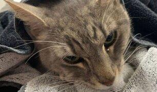 Gato muere tras proteger a dos niños del ataque de una peligrosa serpiente en Australia