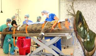 EEUU: extraen zapato del estómago de un cocodrilo de 154 kilos
