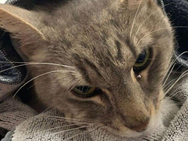 Derrumbe en Miami: hallan vivo a gato que permaneció 16 días bajo los escombros