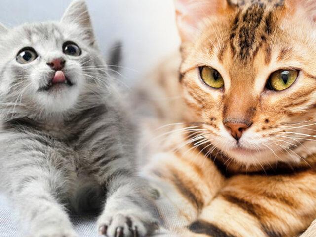 Se celebra hoy el Día Internacional del Gato