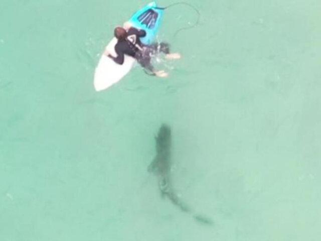 Australia: surfista se baja de tabla y asusta a un tiburón