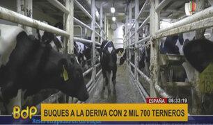 España: hallan dos buques a la deriva con 2 mil 700 terneros deshidratados y hambrientos