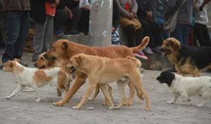 Arequipa: reportan 18 casos de rabia canina en lo que va del año 2021
