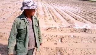 Ica: 80 hectáreas de cultivos resultaron inundadas tras desborde de río