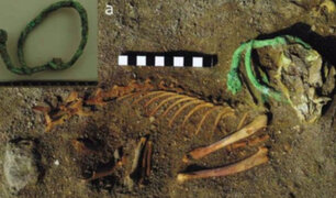 Egipto: descubren cementerio de animales que podría ser el más antiguo del mundo