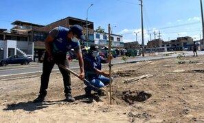 Municipalidad de Lima plantará 700 árboles en Villa El Salvador