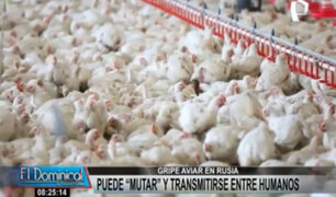 Rusia: gripe aviar detectada en granjas puede mutar y transmitirse a humanos
