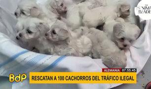 Rescatan a 100 cachorros de tráfico ilegal en Alemania