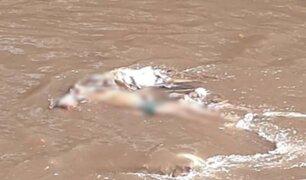 Hallan cadáver de hombre que fue arrastrado hace dos días por río en Ferreñafe