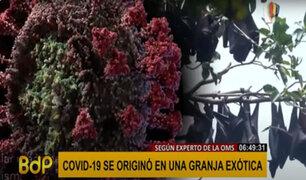 OMS: experto asegura que la COVID-19 se originó en una granja china
