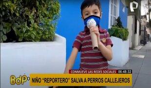 """Niño """"reportero"""" salva a perros callejeros"""