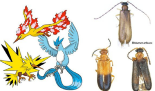 Científicos descubren tres escarabajos y los nombran como Pokémon legendarios