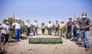 Arequipa: asociación de agricultores quintuplicaron su producción de palta hass