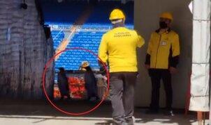 VIDEO: dos pingüinos en el Santiago Bernabéu causan revuelo en redes