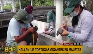 Ecuador: hallan 185 crías de tortugas gigantes en una maleta