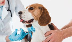 Carnivac-Cov: Rusia registra la primera vacuna para animales contra el COVID-19