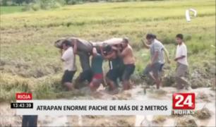 Atrapan paiche de más de dos metros en Rioja