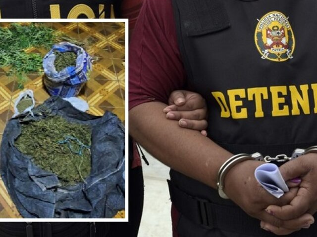 PNP halla plantaciones de marihuana en huerto de sexagenarios