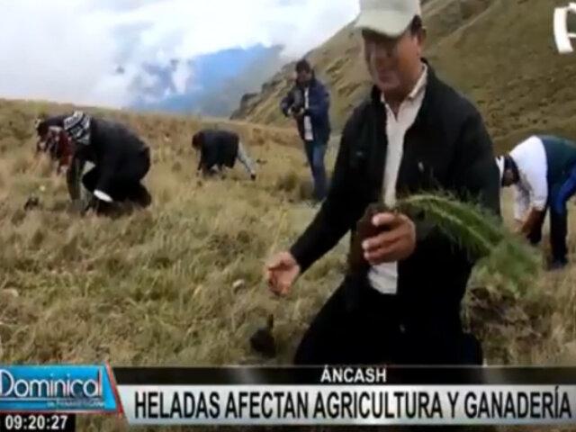 Huari: Siembran 12 mil plantas nativas ante bajas temperaturas