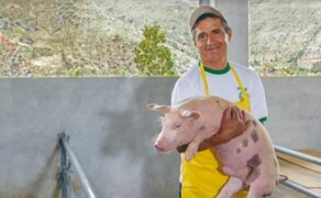 Midagri: Ganaderos podrán proteger a sus animales con póliza de seguro pecuario