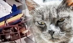 Gato se enfrenta a siete perros y los hace correr