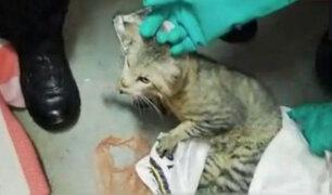 """""""Narcogato"""": sorprenden a felino intentando pasar droga a prisión de máxima seguridad"""