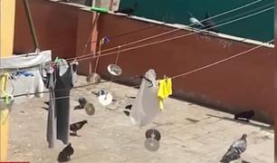 Cercado de Lima: adulto mayor alimenta a decenas de palomas y perjudica a vecinos